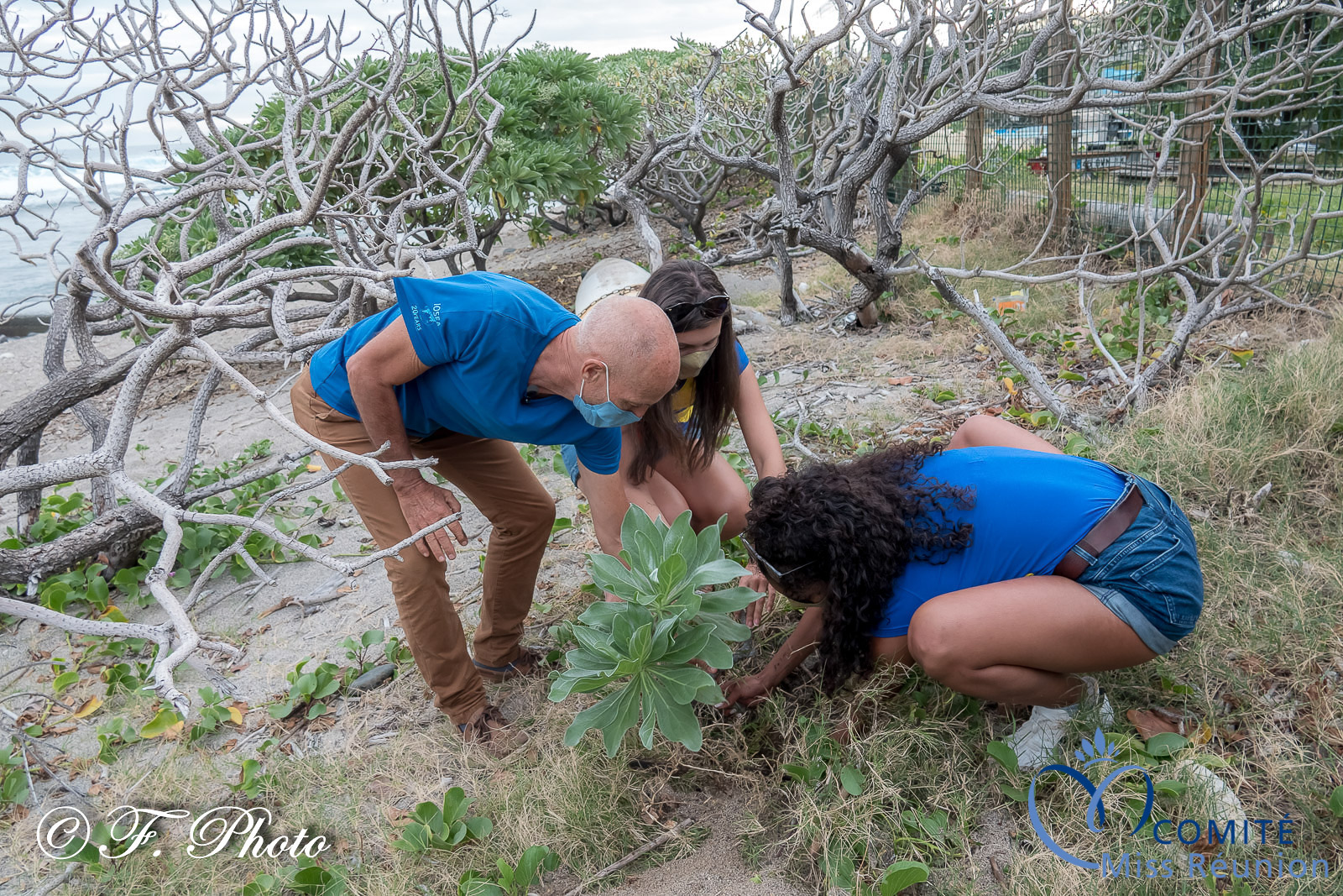 Elles ont toutes planté un arbre sur la plage...